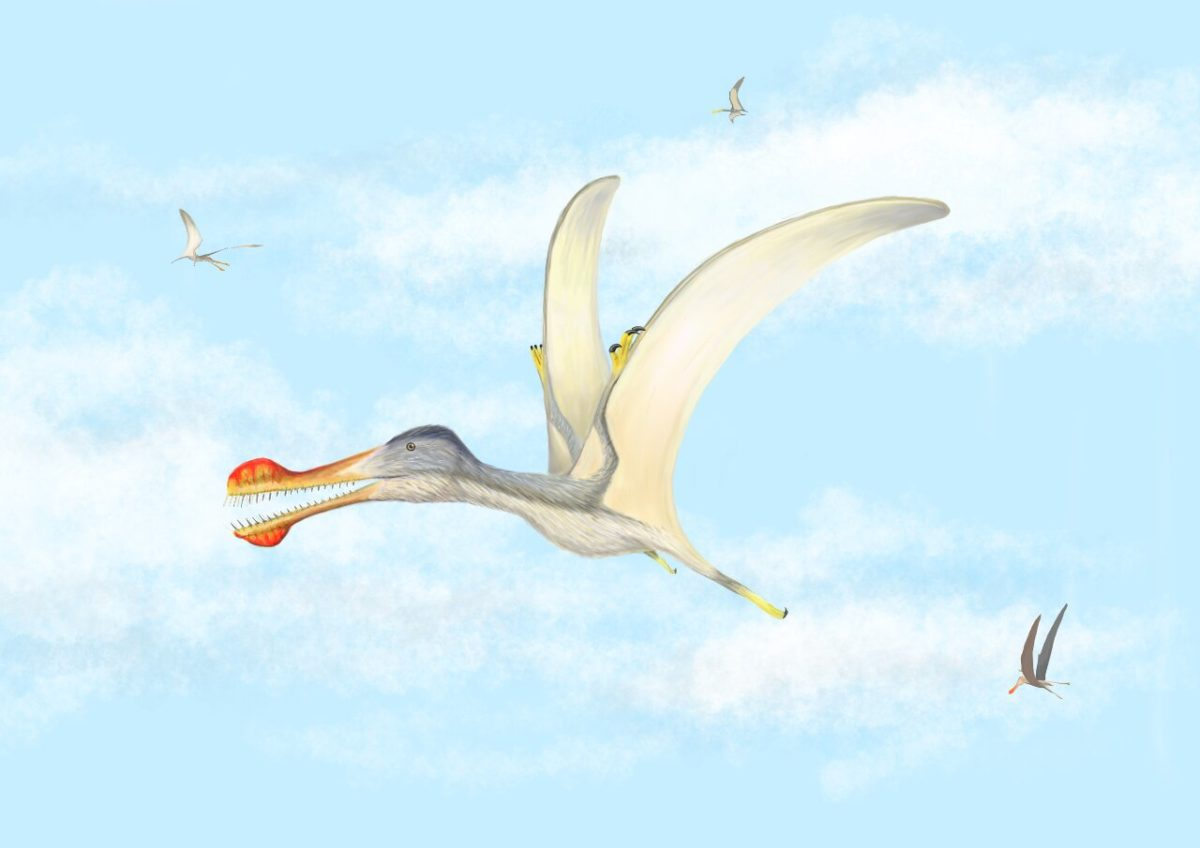 Anhanguera soaring the skies over the Kem Kem with Coloborhynchus and Ornithocheirus . Credit: Megan Jacobs