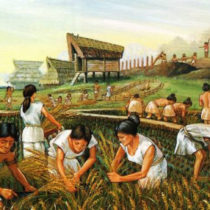 As ancient farming developed, so did cooperation — and violence