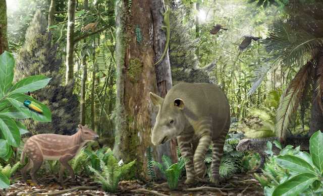 Window into the 47 million year old ecosystem of the Geiseltal fossil locality with the small-sized horse-ancestor Propalaeotherium on the left, the ancient tapir Lophiodon in the middle, and a young terrestrial crocodile Bergisuchus in the background. Credit: Márton Szabó