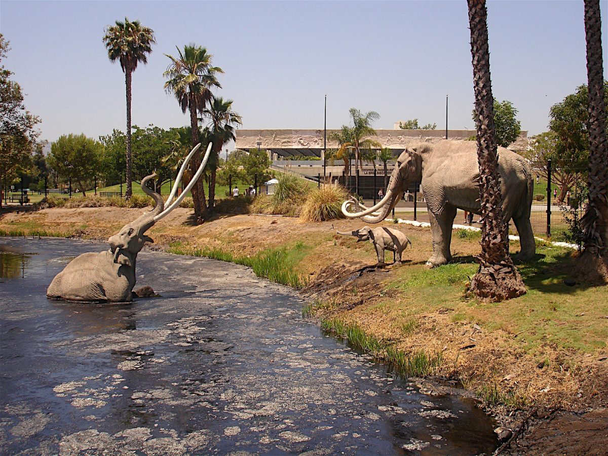 "Rancho La Brea has been associated with the image of big animals getting stuck in ""tar pits"". Photo: courtesy La Brea Tar Pits."