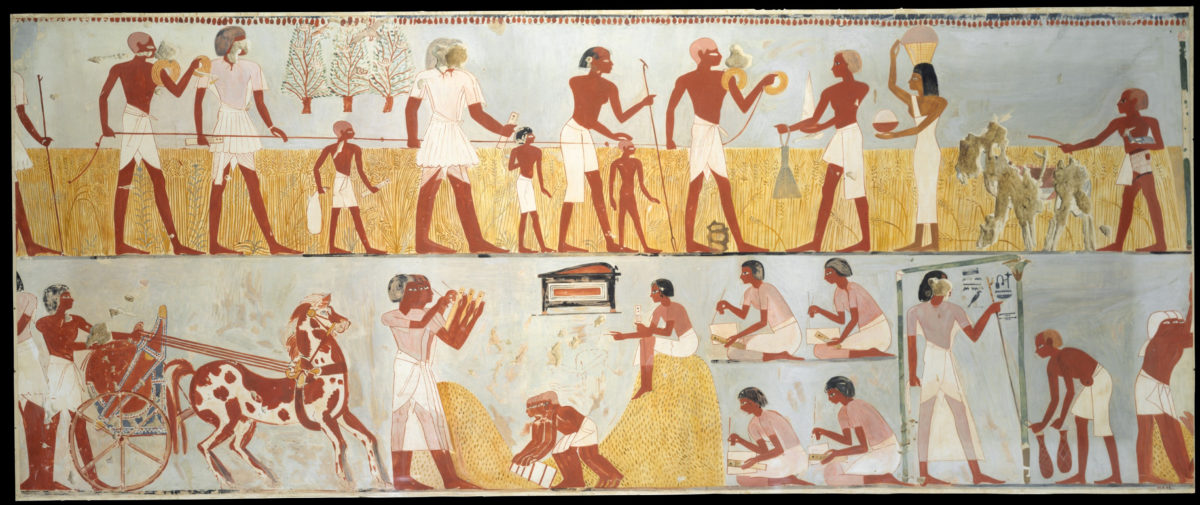 Harvest Scenes, Tomb of Menna. Credit: Wikimedia Commons