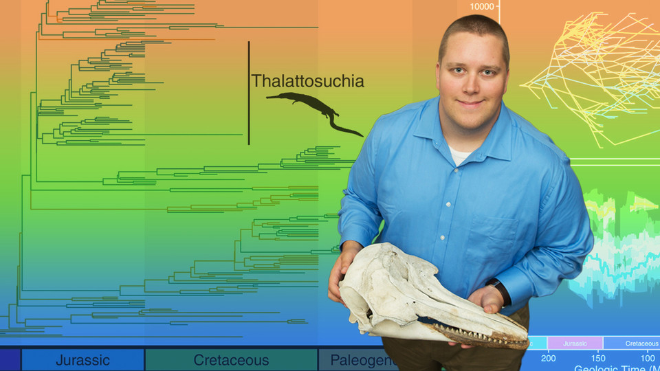 Nebraska's Will Gearty holds the skull of a porpoise, whose torpedo-like body resembles those of ancient crocodiles that spent their entire lives in the water.