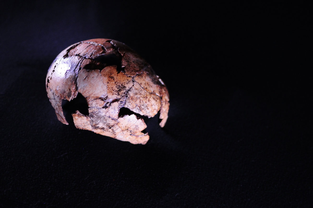 A Homo erectus skullcap found northwest of Johannesburg in South Africa has been identified as the oldest to date, in research published in Science. The hominin is a direct ancestor of modern humans, experienced a changing climate, and moved out of Africa into other continents. The discovery of DNH 134 pushes the possible origin of Homo erectus back between 150,000 and 200,000 years. Credit: Therese van Wyk, University of Johannesburg.