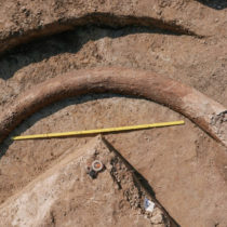 Discovery of 8-foot mammoth tusk in Bavaria