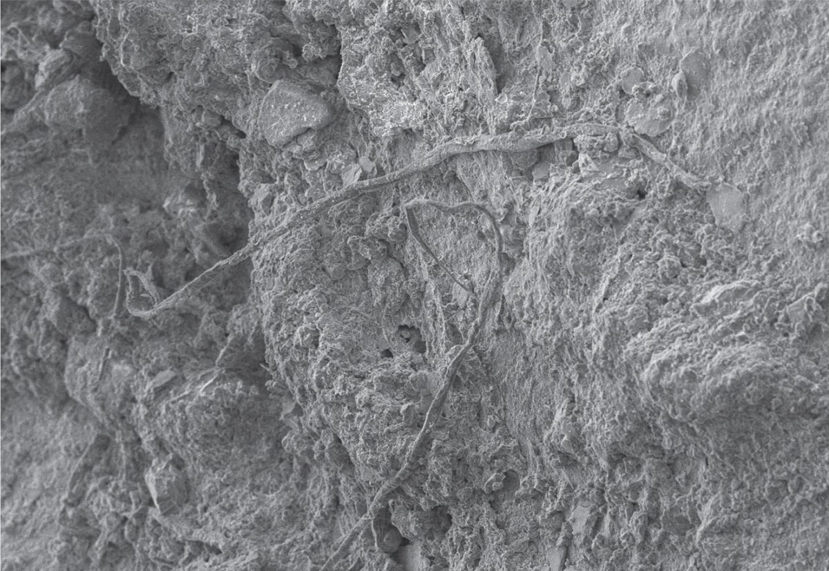 SEM photo of untwisted fibres on artefact – Credit: Scientific Reports