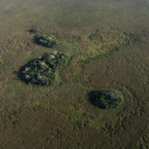 Earliest humans in the Amazon created thousands of 'forest islands'