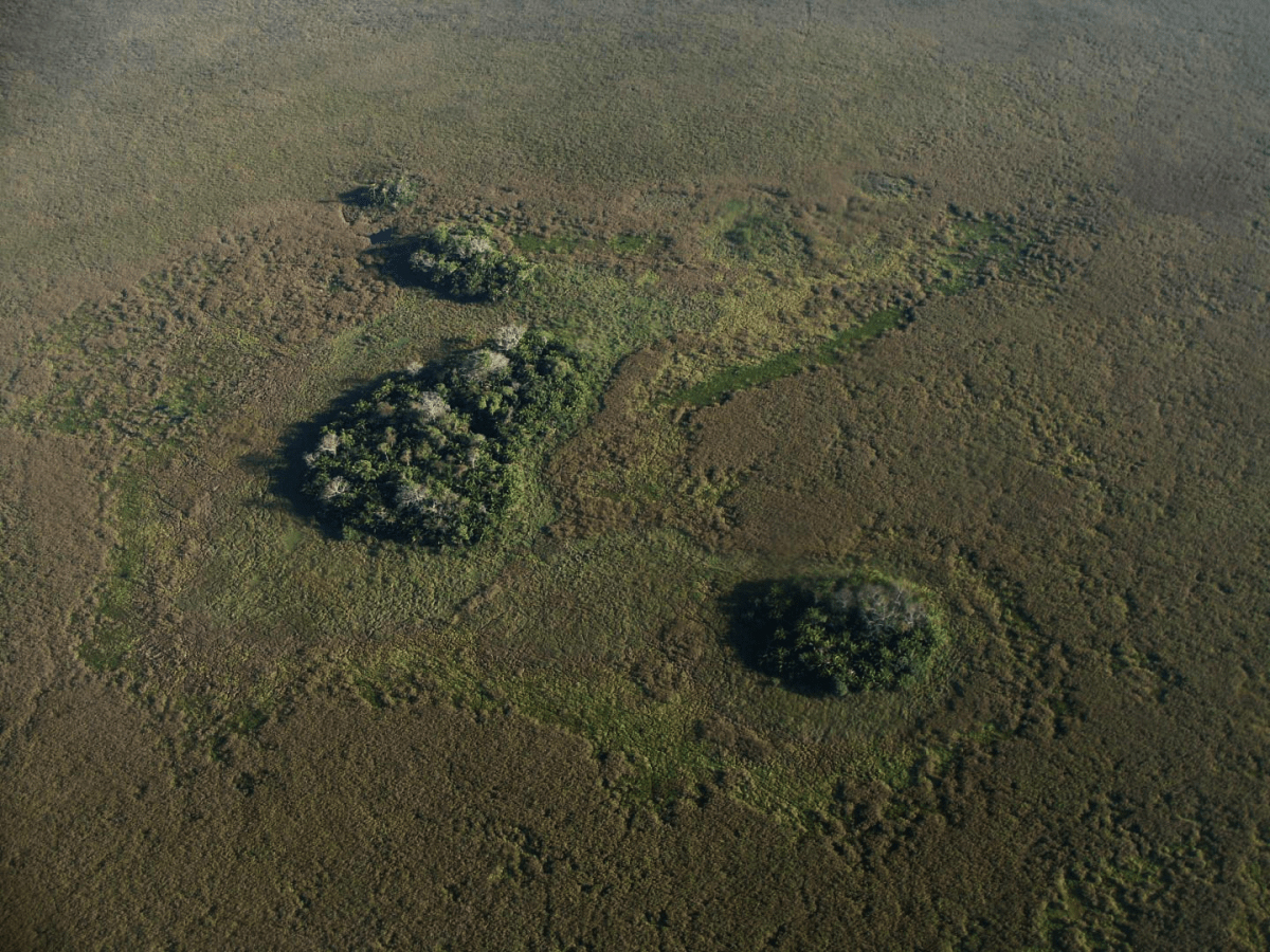 Forest islands seen from above. Credit: Umberto Lombardo