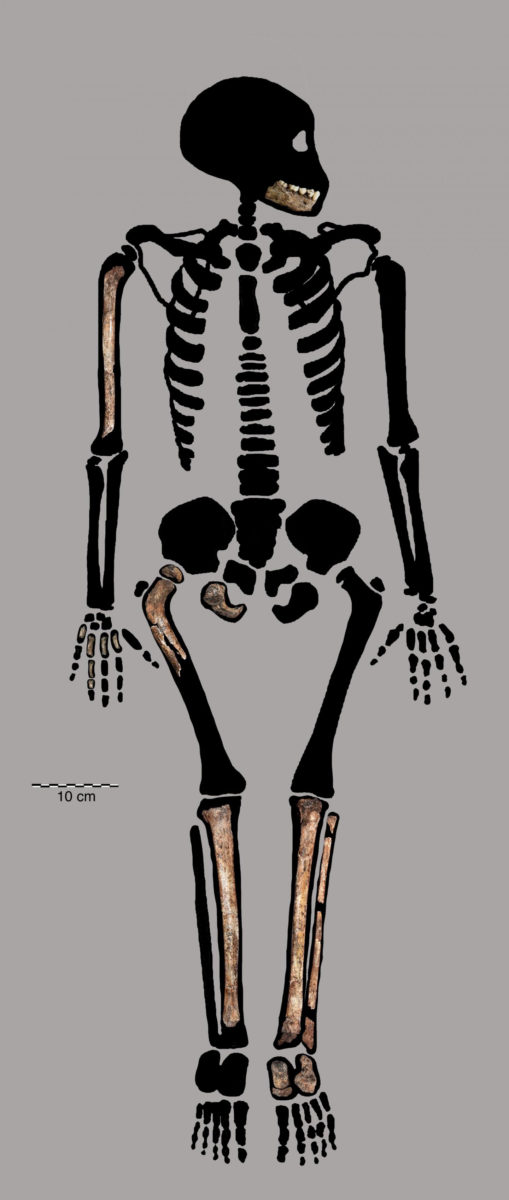 Homo naledi juvenile remains offers clues to how our ancestors grew up. Credit: Bolter et al. PLOS ONE 2020 (CC BY)