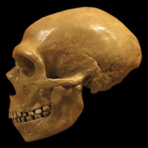 Modern humans, Neanderthals share a tangled genetic history