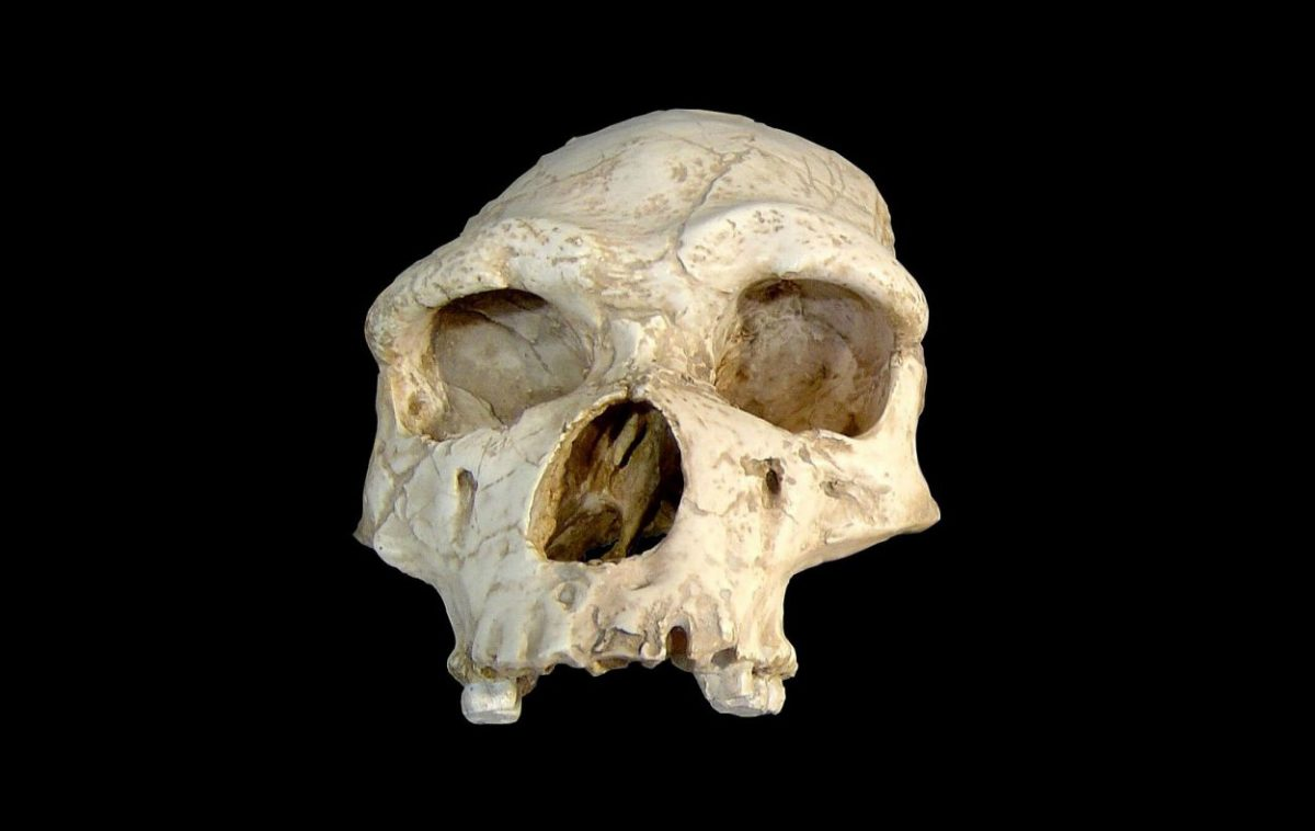 The new genomic analysis compares several ADHD-associated genetic variants described in current European populations to assess its evolution in samples of the human species (Homo sapiens), modern and ancient, and in samples of Neanderthals (Homo neanderthalensis).
