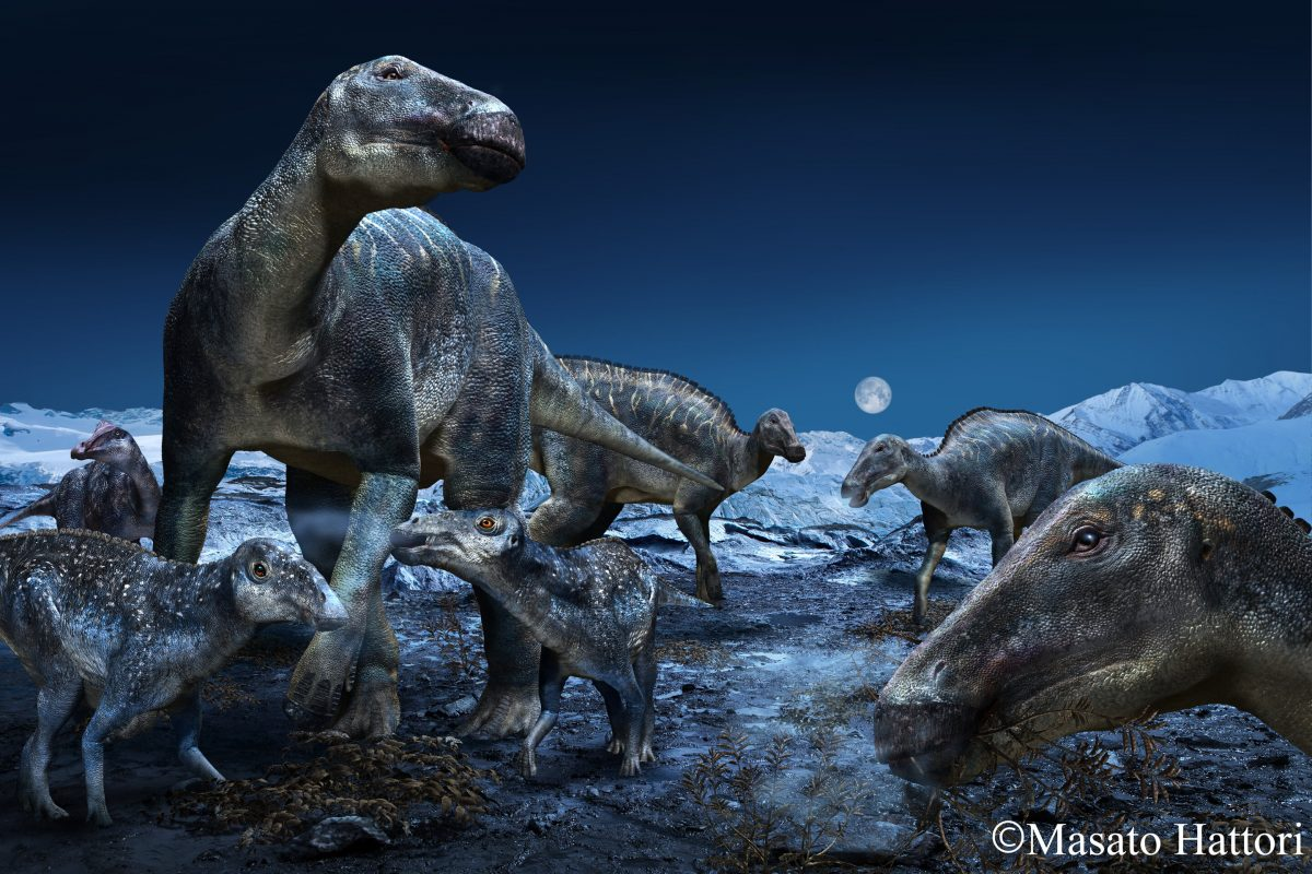 The study explores the proliferation of the most commonly occurring duck-billed dinosaur of the ancient Arctic as the genus Edmontosaurus. The findings reinforce that the hadrosaurs had a geographical distribution of approximately 60 degrees of latitude, spanning the North American West from Alaska to Colorado. Credit: Masato Hattori