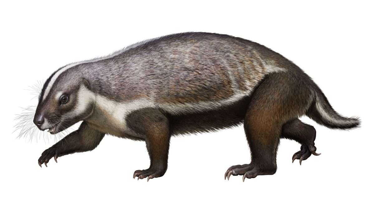The finding of the new mammal, called Adalatherium, which is translated from the Malagasy and Greek languages and means