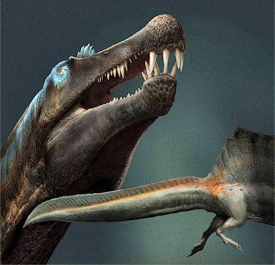 Spinosaurus aegyptiacus, the longest predatory dinosaur known.