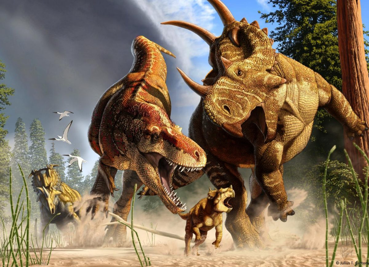 In this artist's depiction of wildlife from Alberta, Canada, 77 million years ago, the tyrannosaur Daspletosaurus hunts a young horned Spinops, while an adult Spinops tries to interfere and a Coronosaurus watches from a distance. Image Credit: Julius Csotonyi