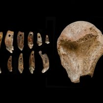 European Ice Age hunters ate wolf meat