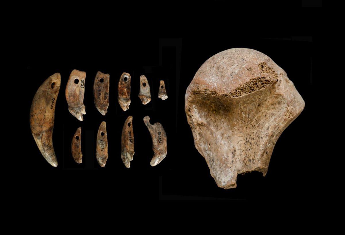Bone fragments. Image Credit: Dr. Piotr Wojtal