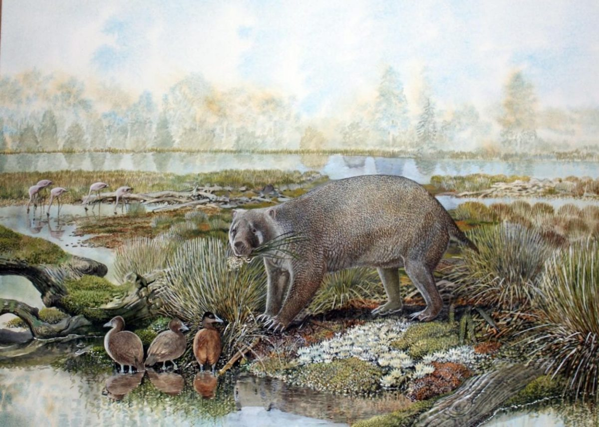 Artist's impression of Mukupirna nambensis living in central Australia that was much greener 25 million years ago. Image Credit: Peter Schouten