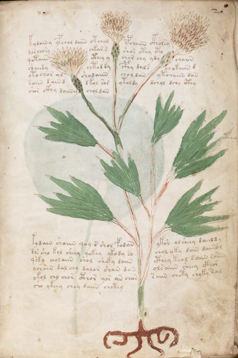 Voynich Manuscript, Yale University, Beinecke Rare Book and Manuscript Library, MS 408, Folio 2r