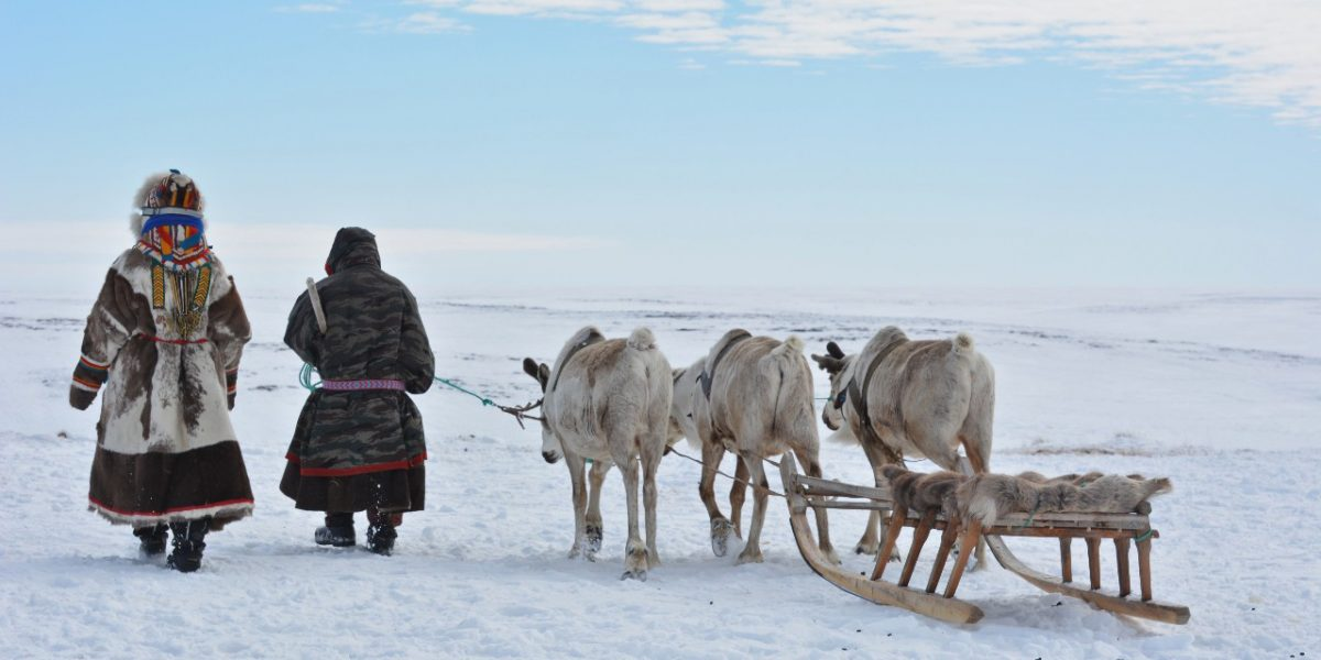Working closely with the Nenets people indigenous to the Iamal Peninsula in northern Siberia, U of A archeologists determined that 2,000-year-old artifacts recovered from the Arctic tundra are likely pieces of harnesses used to train reindeer to pull sleds. (Photo: Robert Losey)