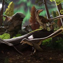 Fossil jawbone from Alaska belongs to dromaeosaurid dinosaur