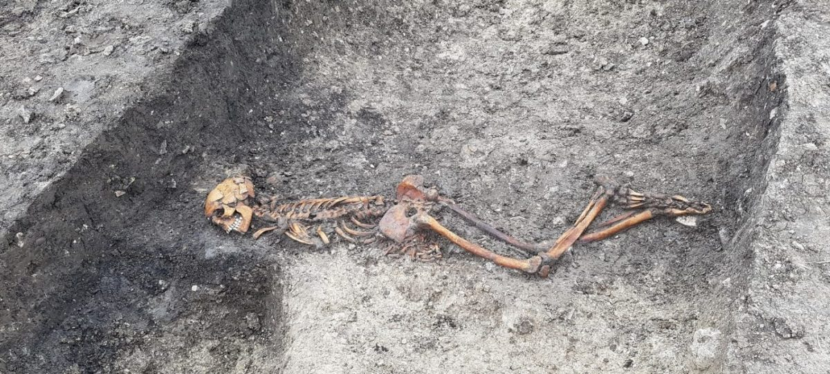 Skeleton of adult male at Wellwick Farm, uncovered by HS2 archaeological works.