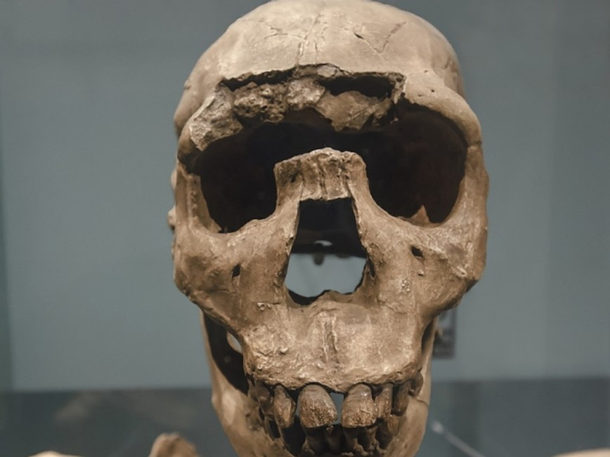 Turkana Boy, above, is the common name of Homo erectus. Credit: ktsimage/Getty Images
