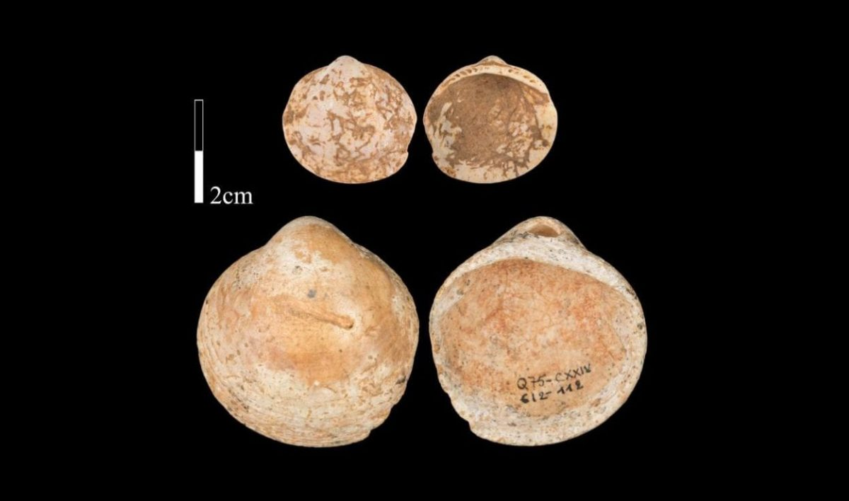Shells are one of the oldest ways humans have adorned and expressed themselves . Image Credit : Bar-Yosef Mayer et al, 2020