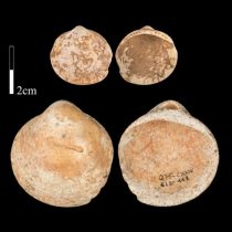 Ancient shells were hung on strings and painted with ochre
