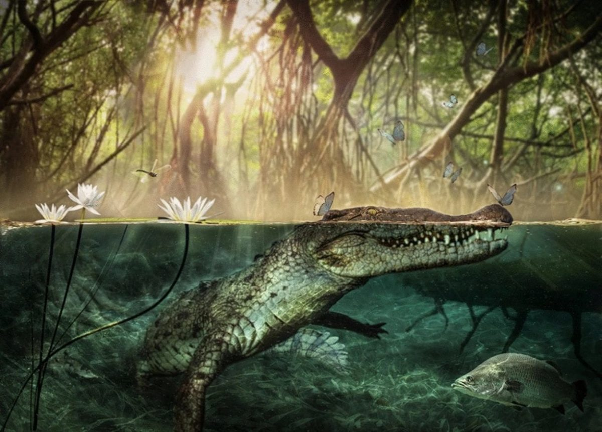 The remains of C. checchiai have been dated to around seven million years ago while the oldest remains of an American crocodile, the extinct C. falconensis, have been dated to around five million years ago. Image Credit : D. A. Iurino