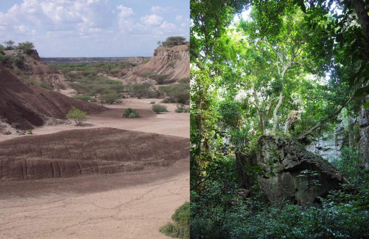 Middle and Later Stone Age populations inhabited a variety of landscapes present in eastern Africa, such as the open savannahs in the Omo basin or tropical coastal forests at Panga ya Saidi but used distinct toolkits to do so. Credit: left: M. Grove; right: J. Blinkhorn