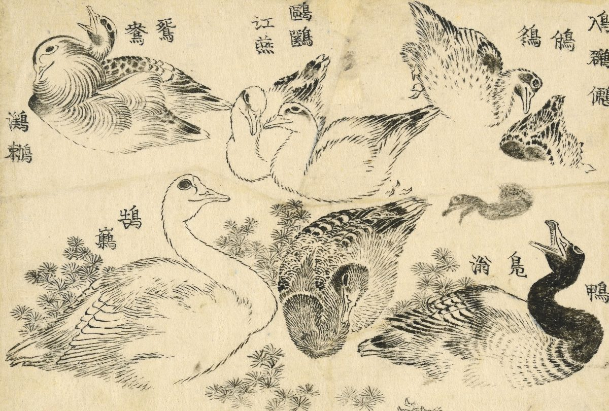 Water birds. Studies of various types of water bird, swimming and diving among river weed. This work seems to have been intended as a kind of picture thesaurus. Often several variants names – sometimes archaic, sometimes apparently fanciful – are given for a particular motif. Here the birds are named, from top right: Little grebe, Duck, wild duck, Seagull (tern), Mandarin duck, waterbird, Swan. Katsushika Hokusai, 1829. © The Trustees of the British Museum