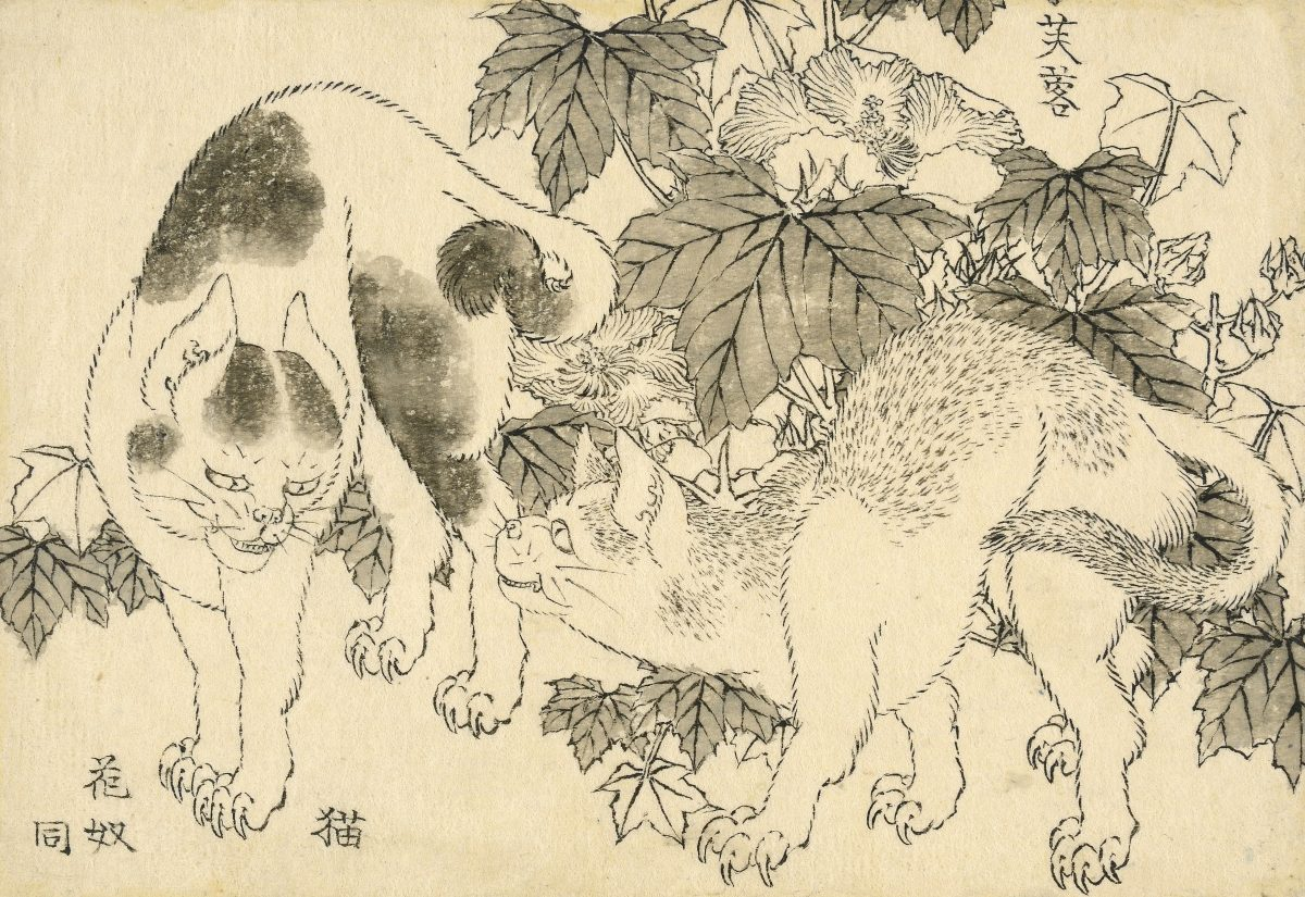 Cats and hibiscus. A standoff between two cats, with hibiscus (fuyō) behind. Katsushika Hokusai, 1829. © The Trustees of the British Museum
