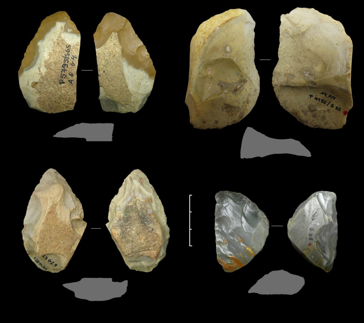 Various Keilmesser and a simple backed knife (top right) from the Neanderthal period 60,000 to 44,000 years ago, from the Sesselfelsgrotte cave near Kelheim (G-complex, excavations by Prof. Freund, FAU. Credit: D. Delpiano, UNIFE