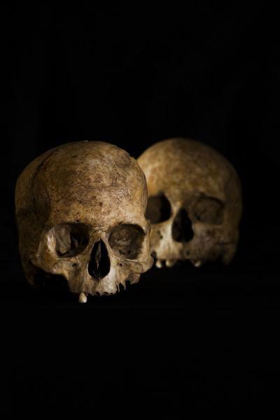 Skull found in the Cueva de la Dehesilla. Credit: Universidad de Sevilla