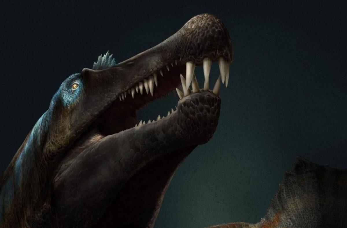 Spinosaurus. Image Credit: Davide Bonadonna