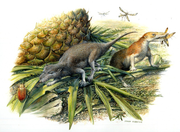 First mammals lived more like reptiles
