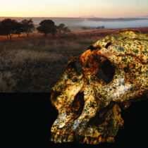 Fossil shows small-scale evolutionary changes in an extinct human species
