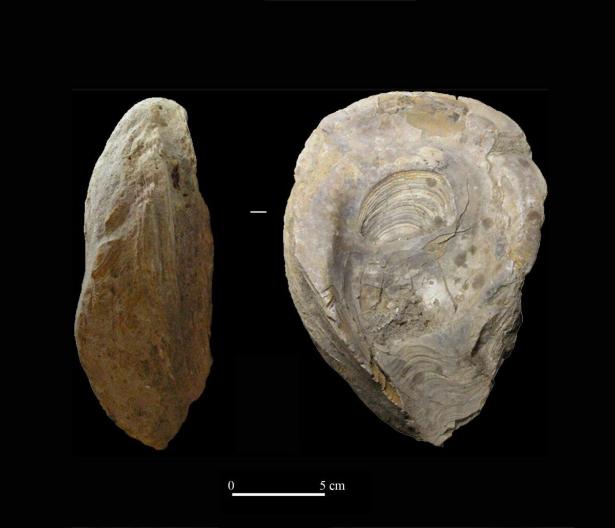Lamp on fossil oyster. Credit: Universidad de Sevilla