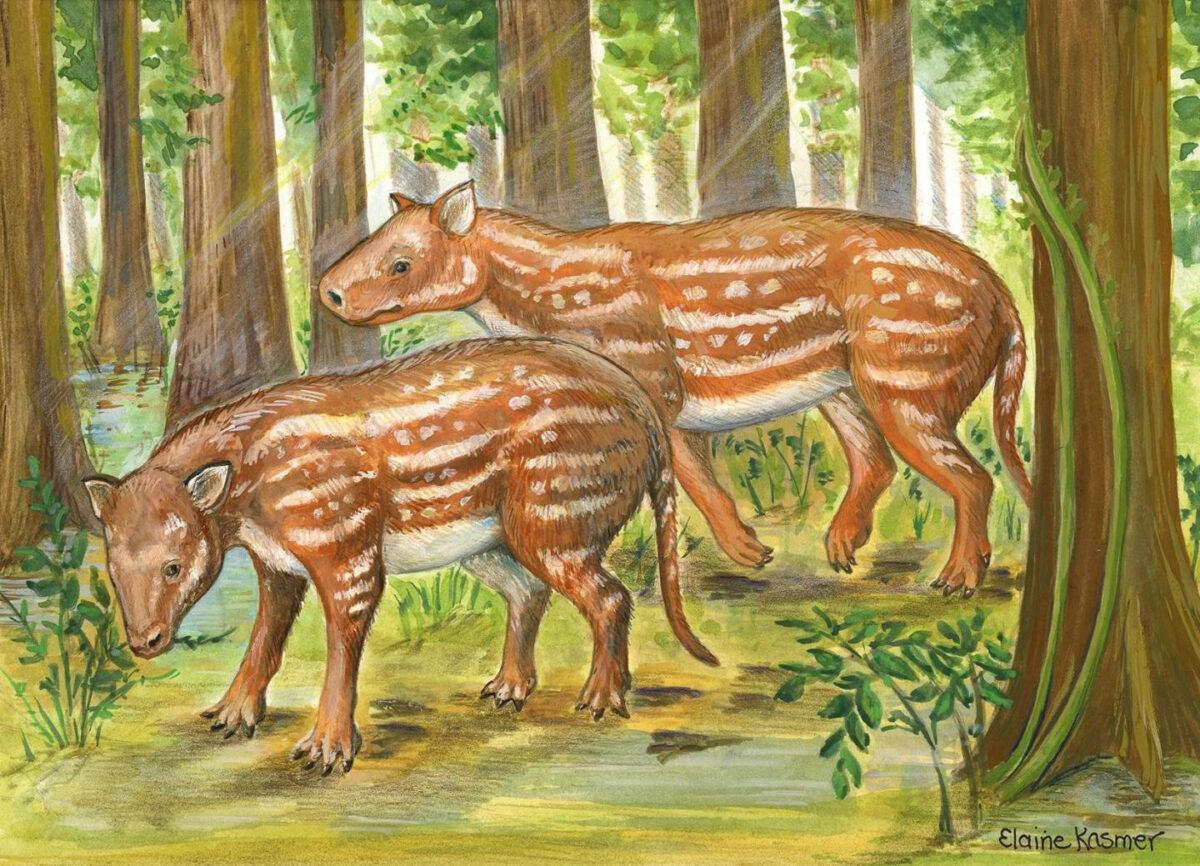Life reconstruction of Cambaytherium (artwork by Elaine Kasmer). Credit : Elaine Kasmer