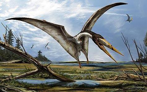 Pterosaurs with these types of beaks are better known at the time period from North Africa, so it would be reasonable to assume a likeness to the North African Alanqa. Credit : Attributed to Davide Bonadonna