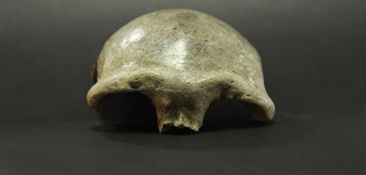 The skullcap found in the Salkhit Valley in eastern Mongolia belonged to a woman who lived 34,000 years ago. Analyses showed: She had inherited about 25 percent of her DNA from Western Eurasian. Credit: Institute of Archaeology, Mongolian Academy of Sciences