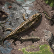 Water-to-land transition in early tetrapods