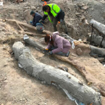 An impressive fossilized tree with its branches was discovered