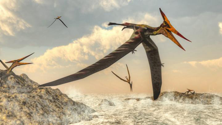 A high flying Pteranodon, a genus of pterosaur that included some of the largest known flying reptiles. Illustration courtesy of Elenarts / Adobe Stock. Credit: Elenarts / Adobe Stock