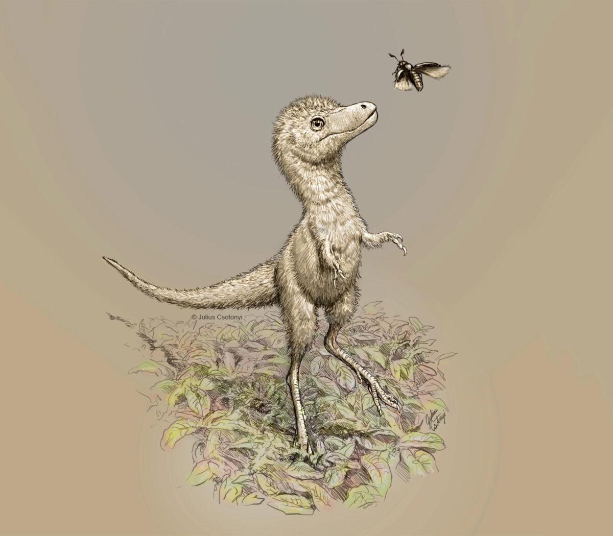 Artist's impression of a juvenile tyrannosaur. Credit: Julius Csotonyi
