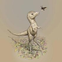 Dinosaur embryo helps crack baby Tyrannosaur mystery
