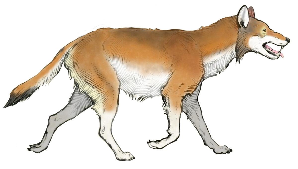 Ancient DNA reveals secrets of dire wolves