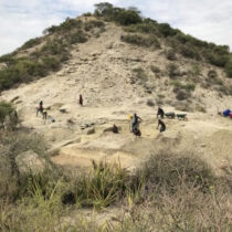 Hominins of Olduvai Gorge coped with ecological changes
