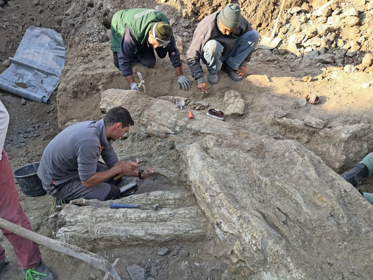 Fossilized trunk near Sigri (photo: Athens and Macedonia News Agency)