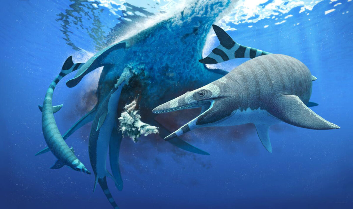 Dinosaur-Era sea lizard had teeth like a shark